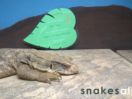 Bosc Monitor GOLD Adoption
