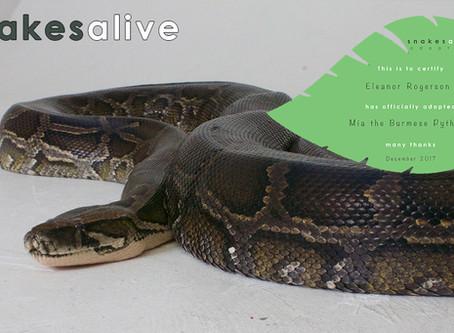 Burmese Python Adoption