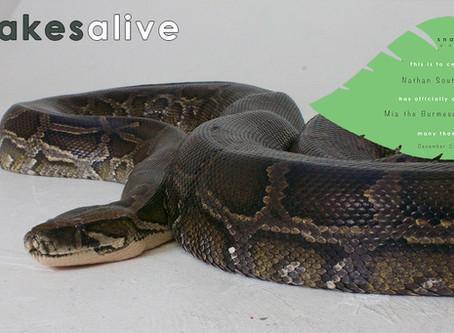 Burmese Python GOLD Adoption