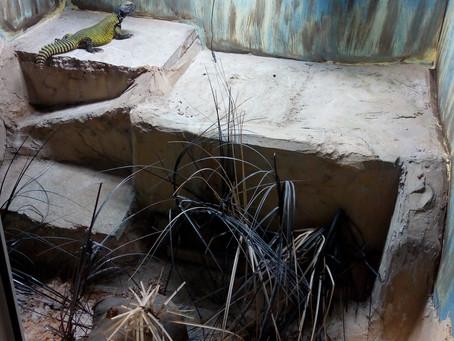 Lizard Enclosures at snakes alive