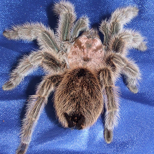#phobias #spiderphobia