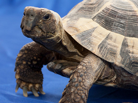 Tortoise & Terrapin Experience