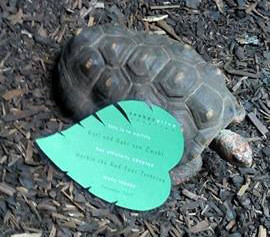 Red-Foot Tortoise Adoption