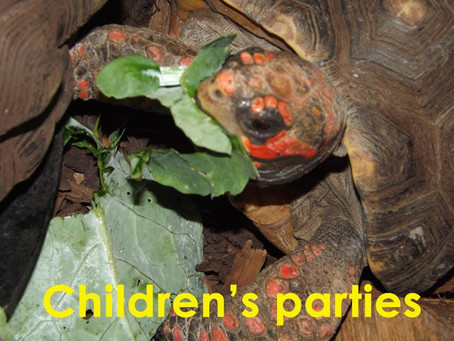 Reptile Parties for Children & Adults