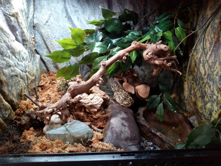 Home Improvements for our Green Toads