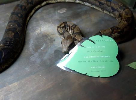 Boa Constrictor Adoption