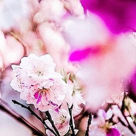 Visiting favorites of flowers past.jpe