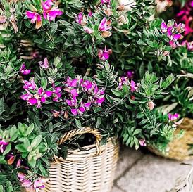Beautiful neighborhood flowers on the wa