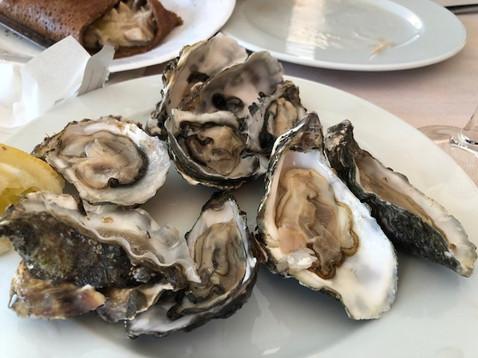 oysters in Gulf of Morbihan