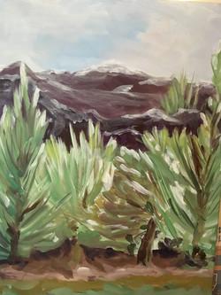 White Vegas Mountains