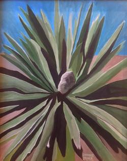 Laguna Cactus