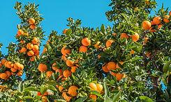 fruity.jpeg