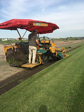 Kurtz Turf Farm cutting sod