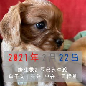 ペット鑑定95匹目!