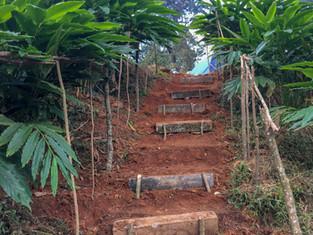 On Sale : Farm Fresh Green Cardamom from Kerala