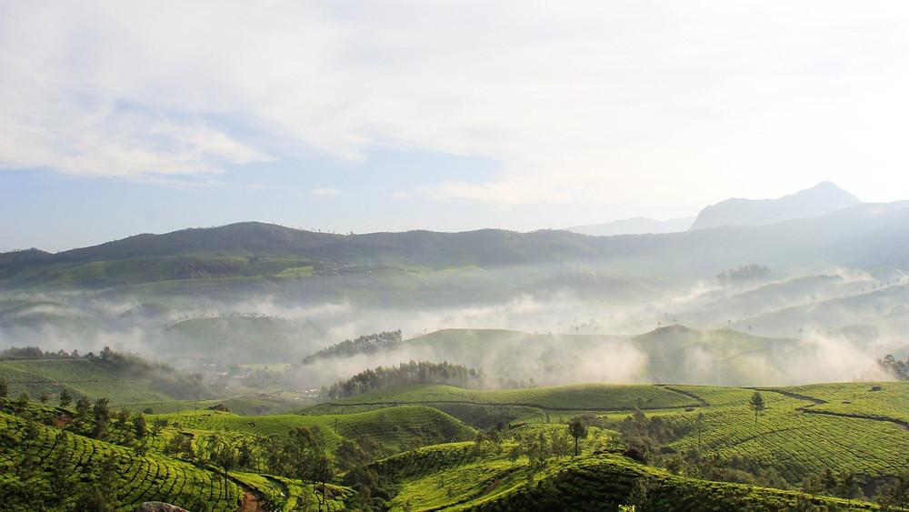 Tea plantations of Munnar