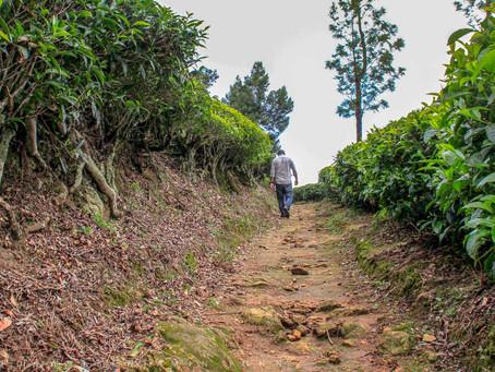 Distinct Places to Visit in Munnar : Kolukkumalai Tea Factory