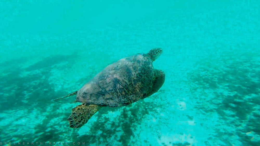 Turtle Watch at Bangaram Island reef
