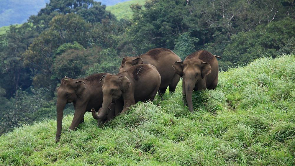 Elephants at Periyar National Park Thekkady