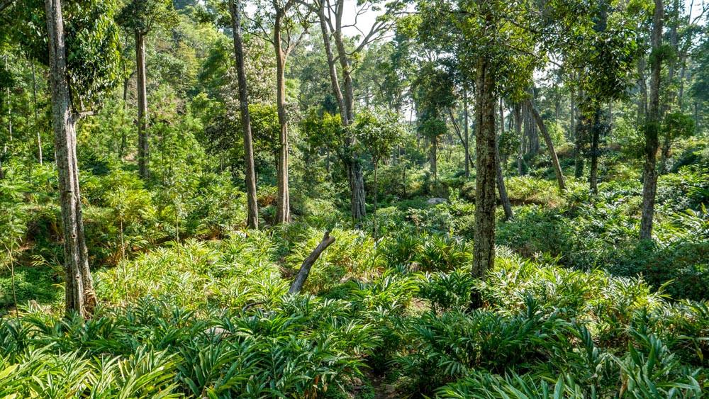 Cardamom hill reserve