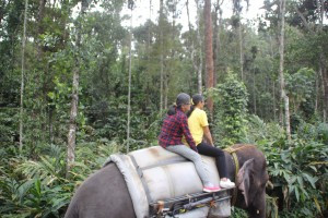 Top things to do in Thekkady
