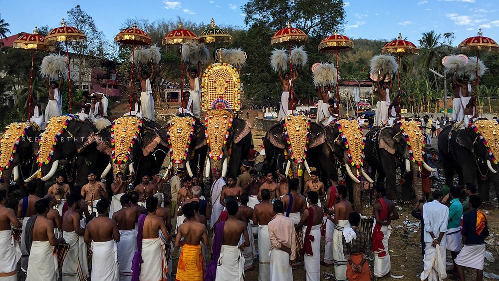 Caparisioned Elephants at Uthralikkavu Temple Pooram