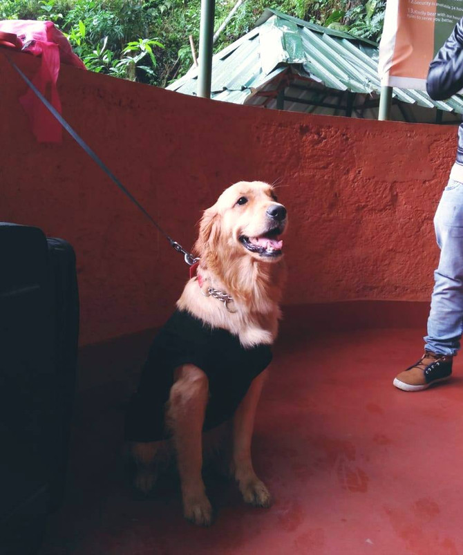 We love being a Pet Friendly Resort in Munnar