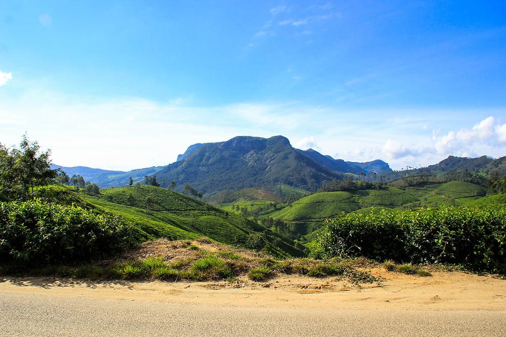 Trek Through the tea plantations in Munnar