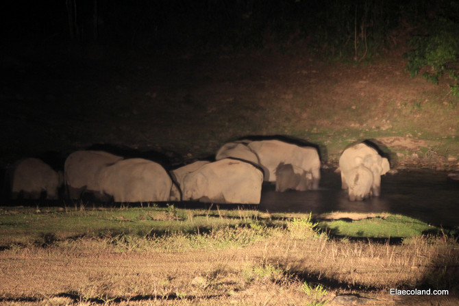 Elephant sighting in Munnar