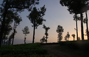 Winding Roads through tea plantations_ed