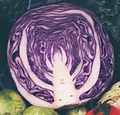 Vegetables - review page.PNG