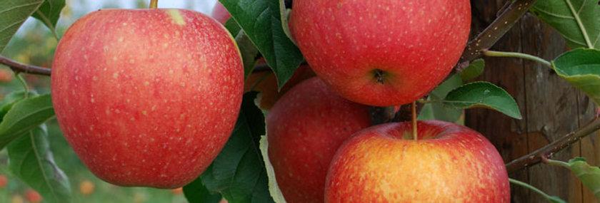 Био ябълки червени 500гр. Моравско село