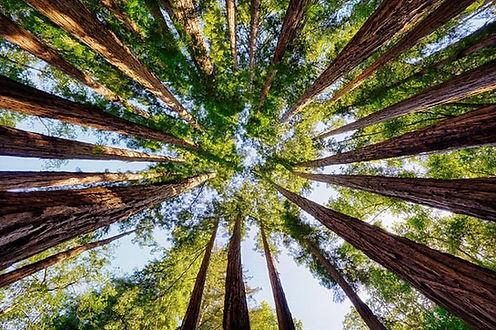trees-social.jpg.860x0_q70_crop-scale.jp
