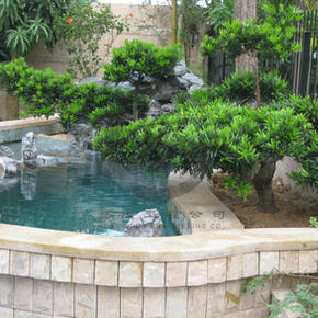 荔枝北-魚池