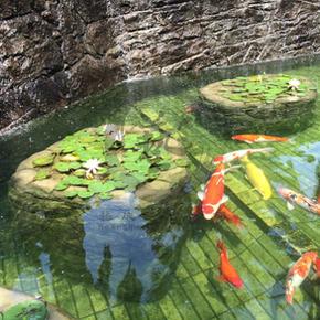 劉金龍-錦鯉魚池