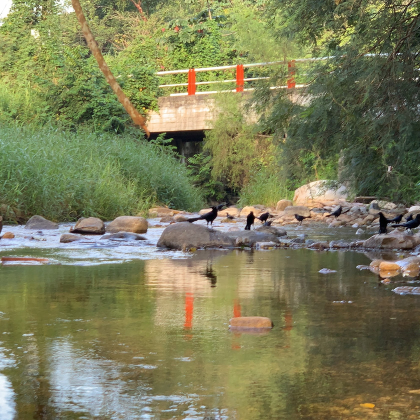 The waters from the Sierra Madre mountains come down through the village of El Nogalito. This is the bridge that leads in Santana Land.