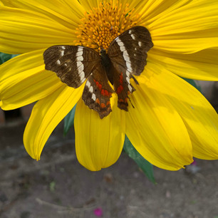 Yellow Flower Brown Butterfly