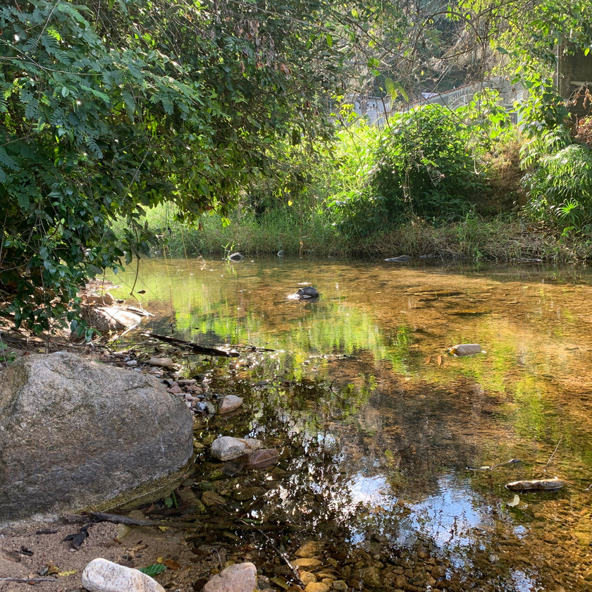 The waters from the Sierra Madre mountains come down through the village of El Nogalito.