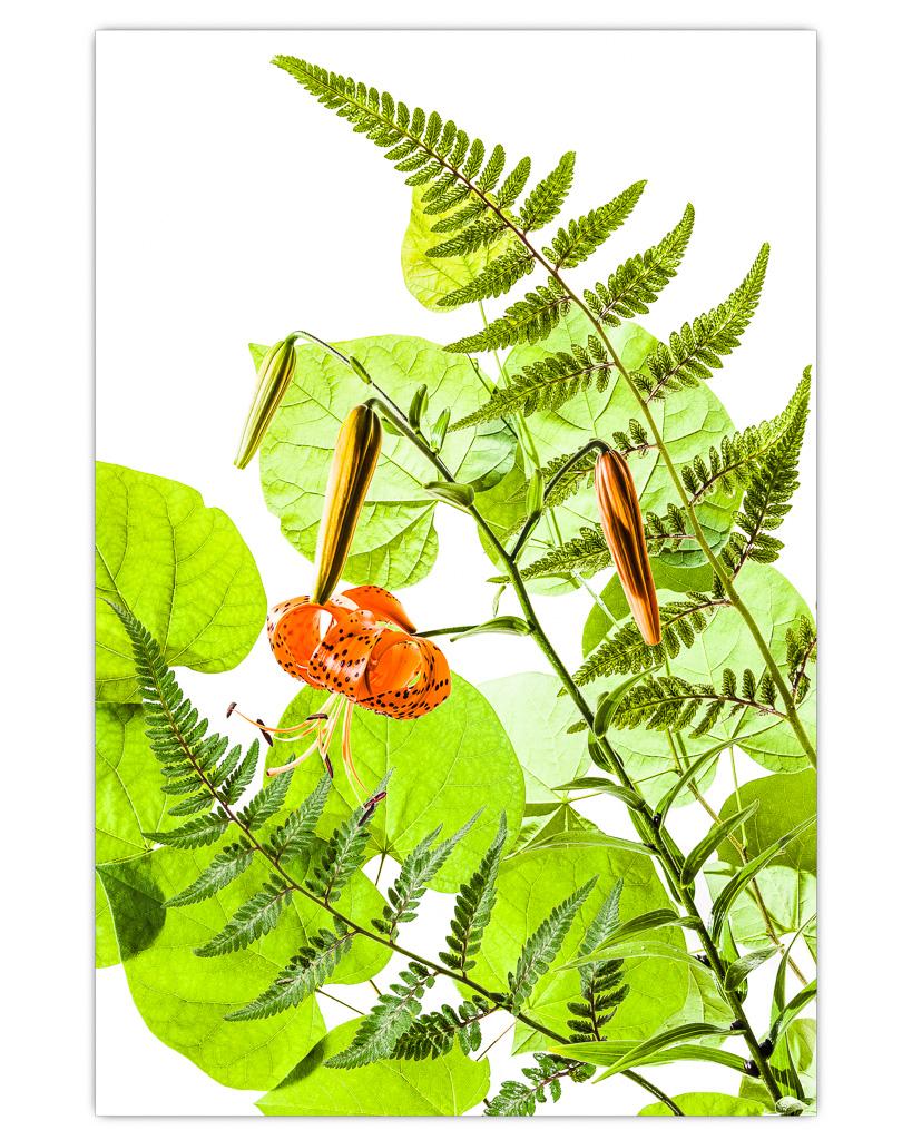 Garden_Plants.jpg