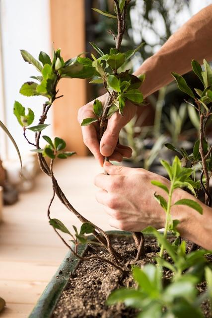 La cura delle piante