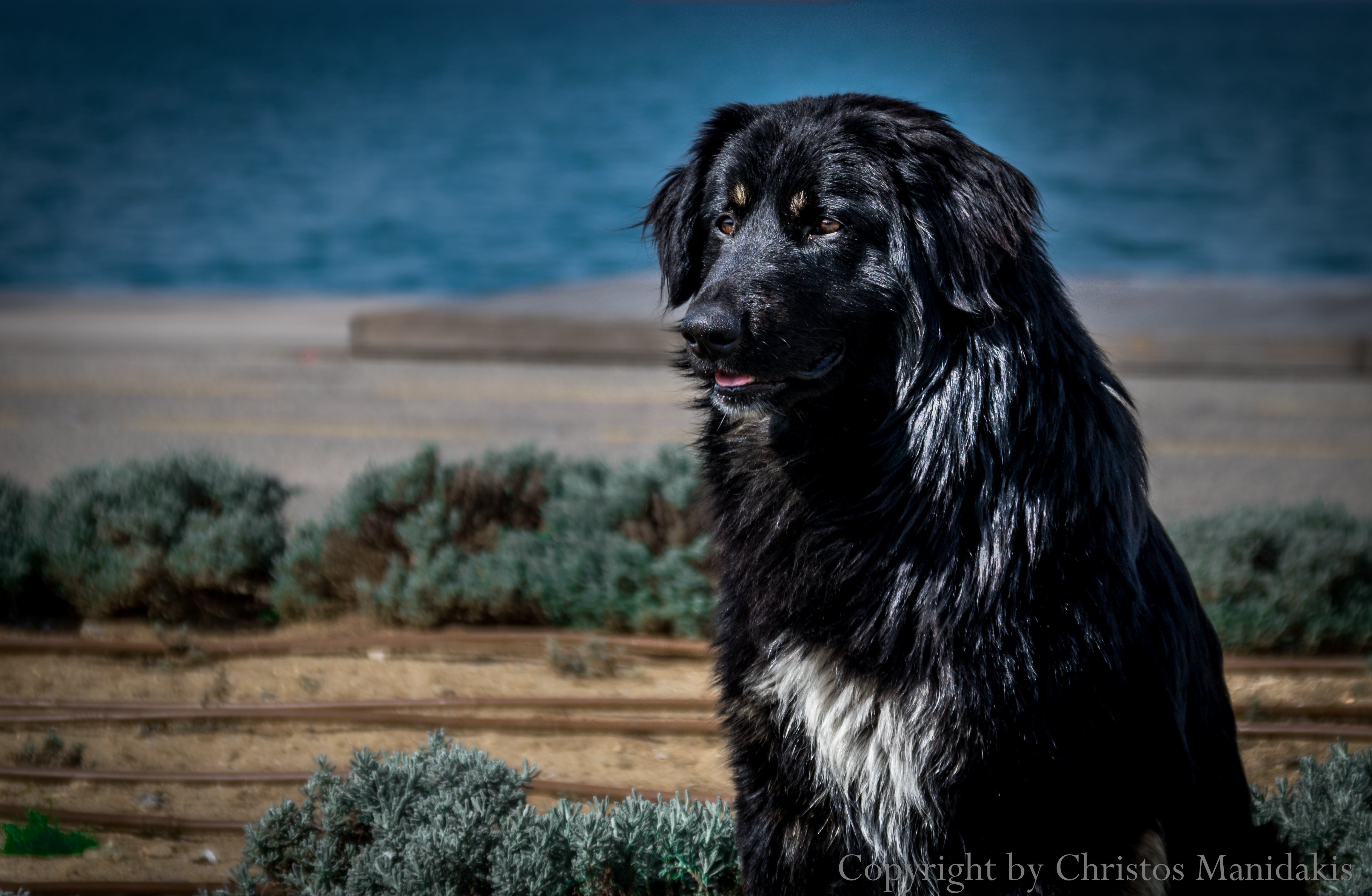 Model dog