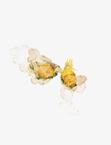 Dry Chrysanthemum