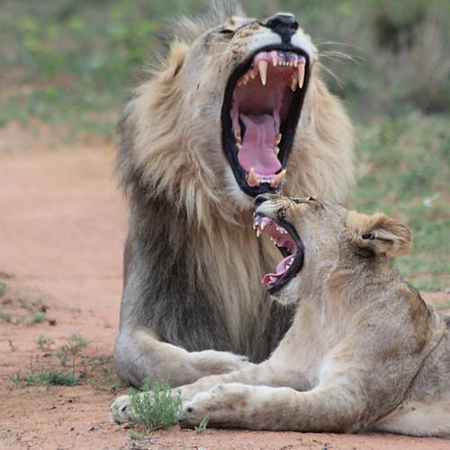 African safari compilation