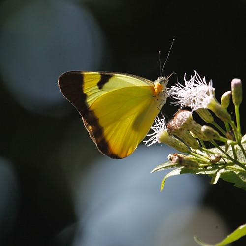 Brazilian butterflies and dragonflies