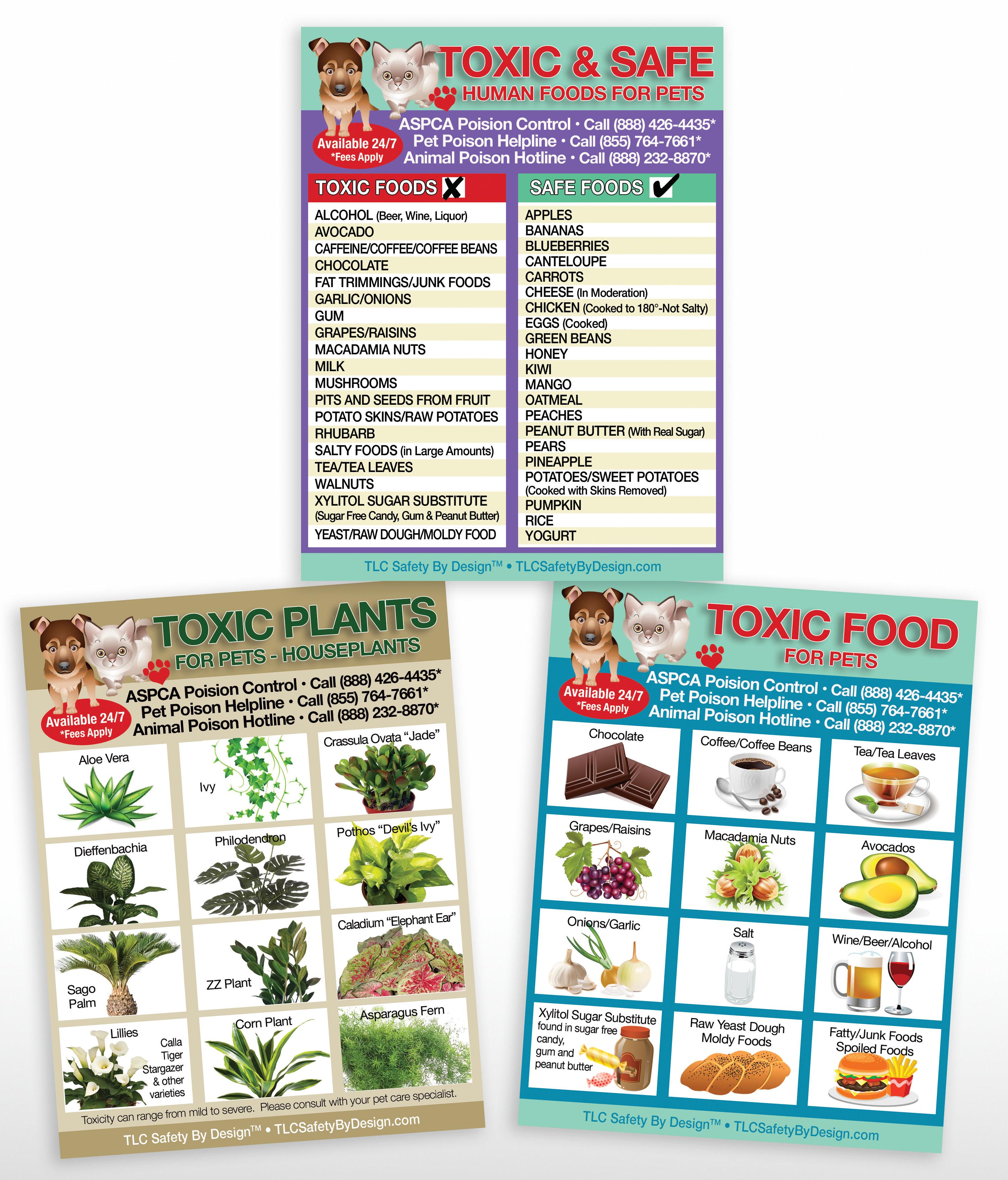 Set 3 Toxic Food Safe Plants Variety Pack Poison For Pets Magnet