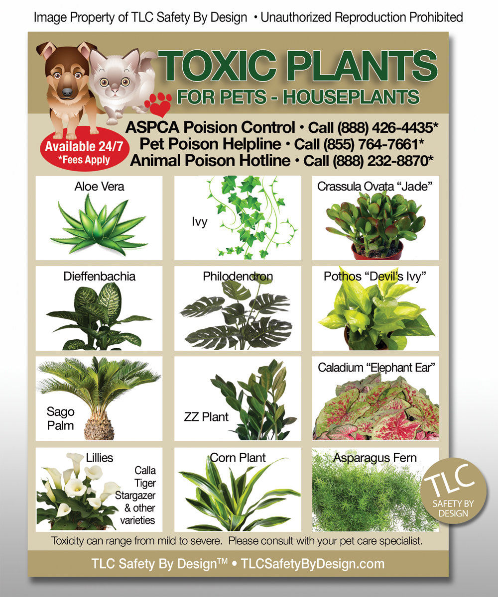 Toxic Plants Poison For Pets Dogs Cats Emergency Ice Refrigerator Magnet