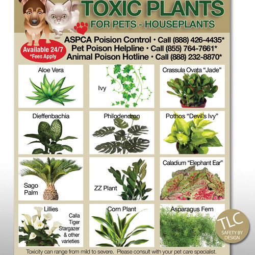 Tlc safety by design toxic foods poison pets dog Houseplants not toxic to cats