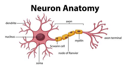 Artificial Neural Network - A Better Understanding!