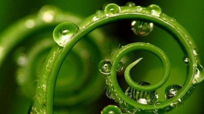 """""""Las plantas tienen nuestros cinco sentidos y quince más.""""."""