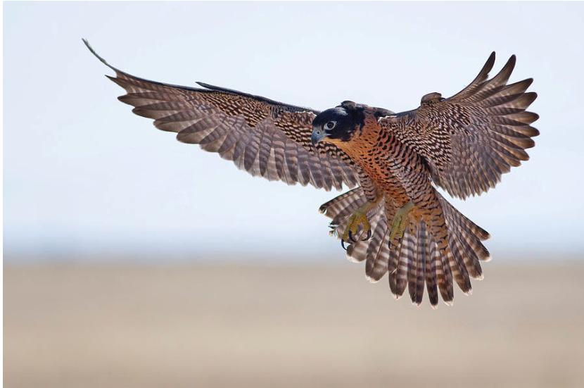 BirdmanRebirdspiegelbeeld.png